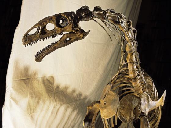 Squelette d'un dinosaure